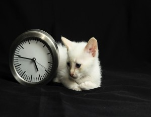 kitty clockcrophome